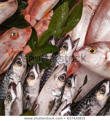 Red mullet and pandora fishes on the market Stock photo © boggy