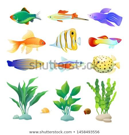 Aquarium couleur affiche escargot poissons décoratif Photo stock © robuart