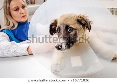 doctor examining dog in x ray room stock photo © kzenon