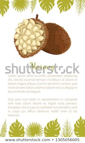 Exotique juteuse fruits vecteur affiche ensemble Photo stock © robuart