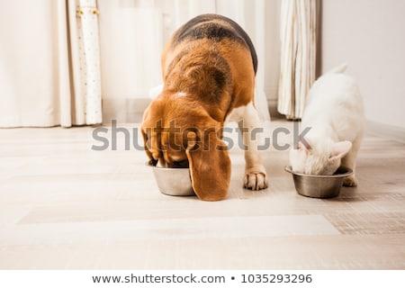 Hond kat eten illustratie voedsel ontwerp Stockfoto © colematt