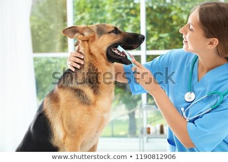 Vrouwelijke arts schoonmaken tand hond volwassen Stockfoto © Kzenon