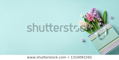 Kertészkedés jácint friss virágok fény szürke Stock fotó © neirfy