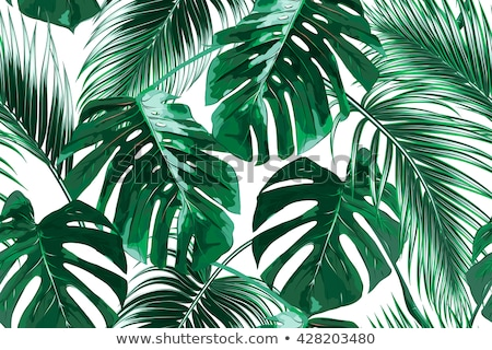 tropical palm leaves isolated on white. Seamless pattern stock photo © sonia_ai