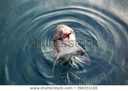 смешные дельфины плаванию морем прыжки Сток-фото © jossdiim