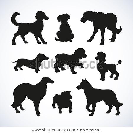 Cocker Spaniel Dog Breed Cartoon Retro Drawing Stock photo © patrimonio