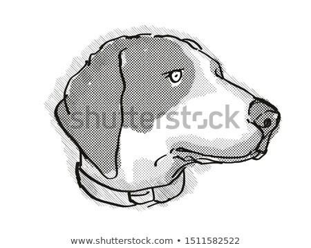 Kutyafajta rajz retro rajz stílus fej Stock fotó © patrimonio