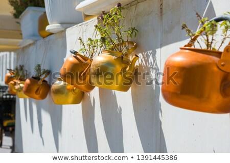 Cobre plantas enforcamento branco parede velho Foto stock © vapi