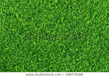Herbe artificielle texture herbe résumé design jardin Photo stock © galitskaya
