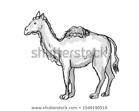 Western Camel Extinct  North American Wildlife Cartoon Drawing Stock photo © patrimonio