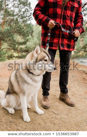 Cute husky dog sitting on path while his owner holding him by leash during chill Stock photo © pressmaster