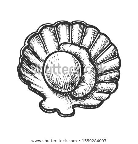 Vlees shell zeevruchten monochroom vector mariene Stockfoto © pikepicture