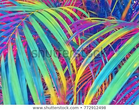 Kert természet neon szalag terv növények Stock fotó © Anna_leni