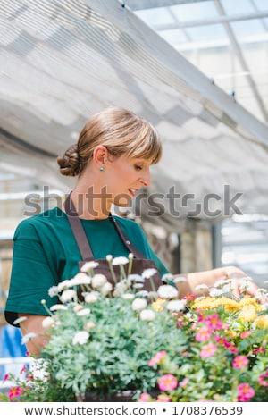 Commercial gardener woman taking care of her potted flowers Stock photo © Kzenon