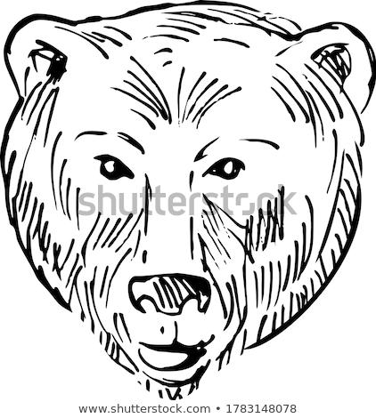 голову Бурый медведь гризли стиль черно белые иллюстрация Сток-фото © patrimonio