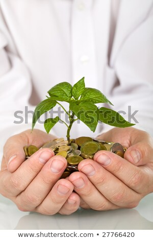 Geld · Anlage · isoliert · weiß · Business · Baum - stock foto © lightkeeper
