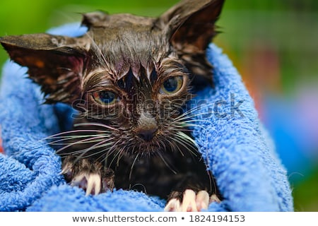 毛のない 猫 タオル 面白い オリエンタル 裸 ストックフォト © PetrMalyshev