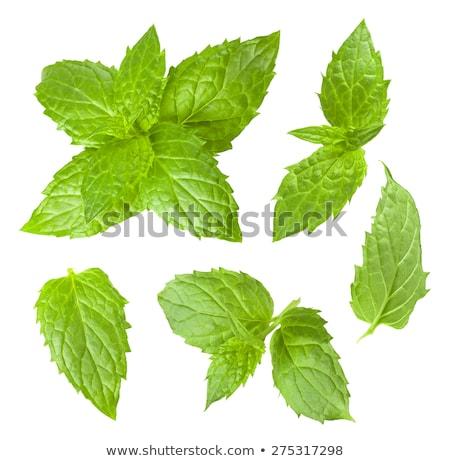 Vers bos aromatisch mint bladeren gekruid Stockfoto © mnsanthoshkumar