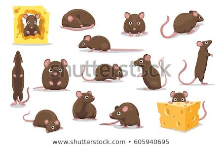 Mouse with cheese Stock photo © dagadu