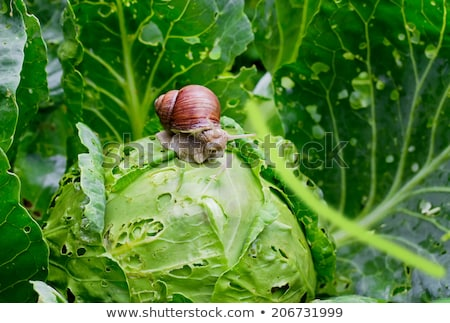 jardin · escargot · naturelles · habitat - photo stock © brulove