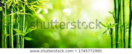 Bambu ağaç orman doğa bahçe sanat Stok fotoğraf © dagadu