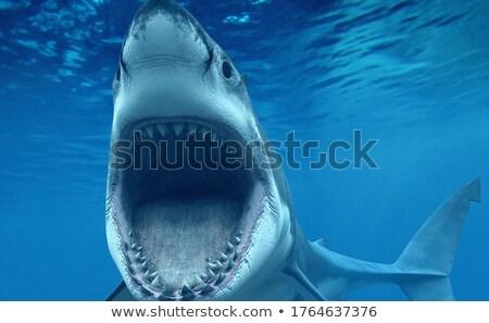 白 · サメ · コンピュータ · 生成された · 3次元の図 - ストックフォト © aliencat