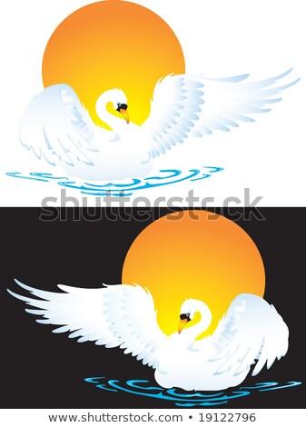 Phoenix · madár · alkat · izolált · fekete · fehér - stock fotó © silvek