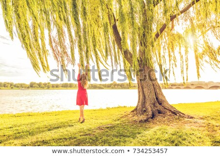 woman reaching up to branch Stock photo © gemphoto