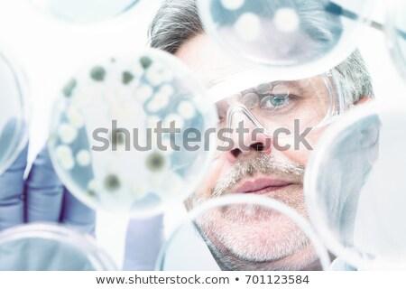 Senior life science researcher grafting bacteria. Stock photo © kasto