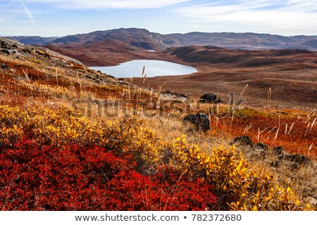 Arctic tundra vegetation Stock photo © Arrxxx