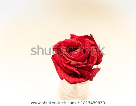 Kırmızı ıslak tebrik kartı sevgililer günü düğün Stok fotoğraf © photocreo