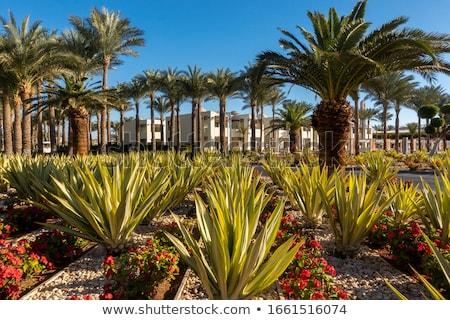 Foto d'archivio: Tropicali · giardino · Egitto · fiore · erba · sole
