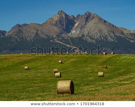 sheaves of hay in the Carpathians Stock photo © OleksandrO