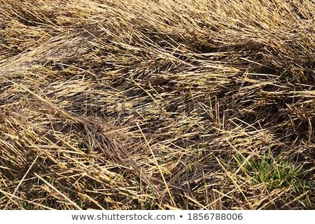 Restolho agrícola maquinaria natureza fundo Foto stock © marekusz