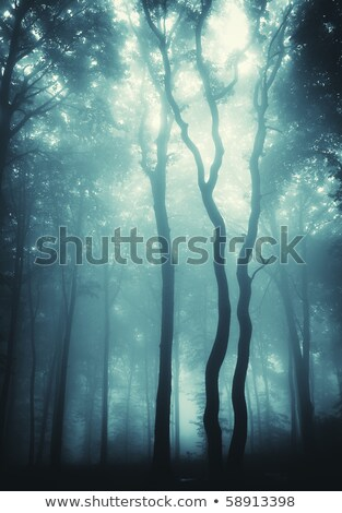 Stock photo: Vertical Photo Of Trees In A Forest With Fog