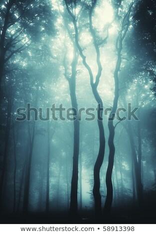 ストックフォト: Vertical Photo Of Trees In A Forest With Fog