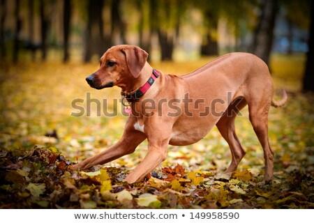 愛らしい · 座って · 白 · 犬 · 目 - ストックフォト © dnf-style