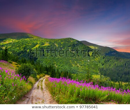 path in the mountains with pink flowers stock photo © kotenko