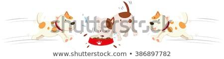Kutyák eszik fut körül illusztráció kutya Stock fotó © bluering