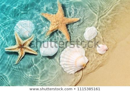 Starfish praia quadro areia da praia pôr do sol mar Foto stock © dmitroza