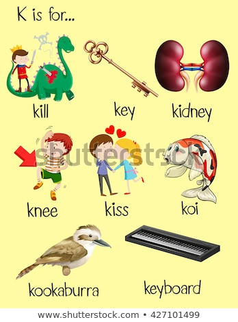 Flashcard letter K is for kidney Stock photo © bluering