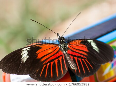 Piros fekete pillangók fényes pillangó fehér Stock fotó © blackmoon979