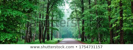 Geçit yeşil park yakın saray ulus Stok fotoğraf © artjazz