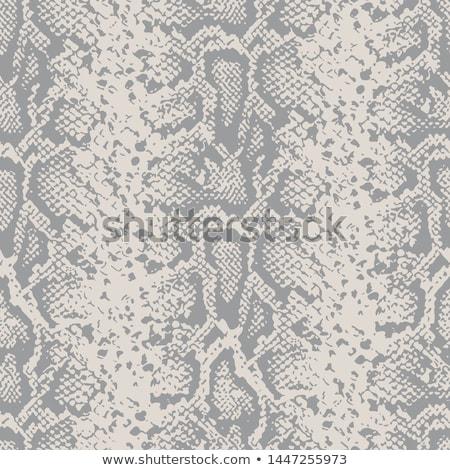 Cobra snake in gray color Stock photo © bluering