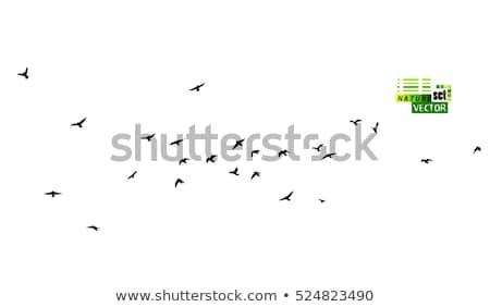 siluet · uçan · kuzgun · kuş · vektör · dizayn - stok fotoğraf © orensila