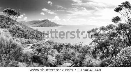 Refuge Cove Wilsons Promontory Panorama  Stock photo © THP