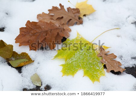 First snow in the city park with trees trees under fresh snow at stock photo © artsvitlyna