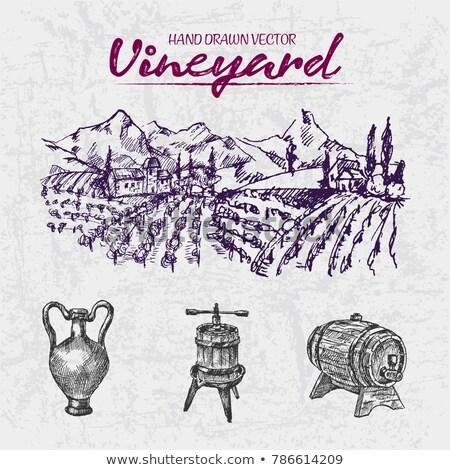 Digital color vector line art wine ancient pitcher Stock photo © frimufilms