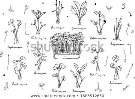緑 芽 セット 勾配 花 ストックフォト © barbaliss