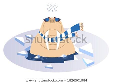Cartoon tricheco ghiaccio buco isolato illustrazione Foto d'archivio © tiKkraf69